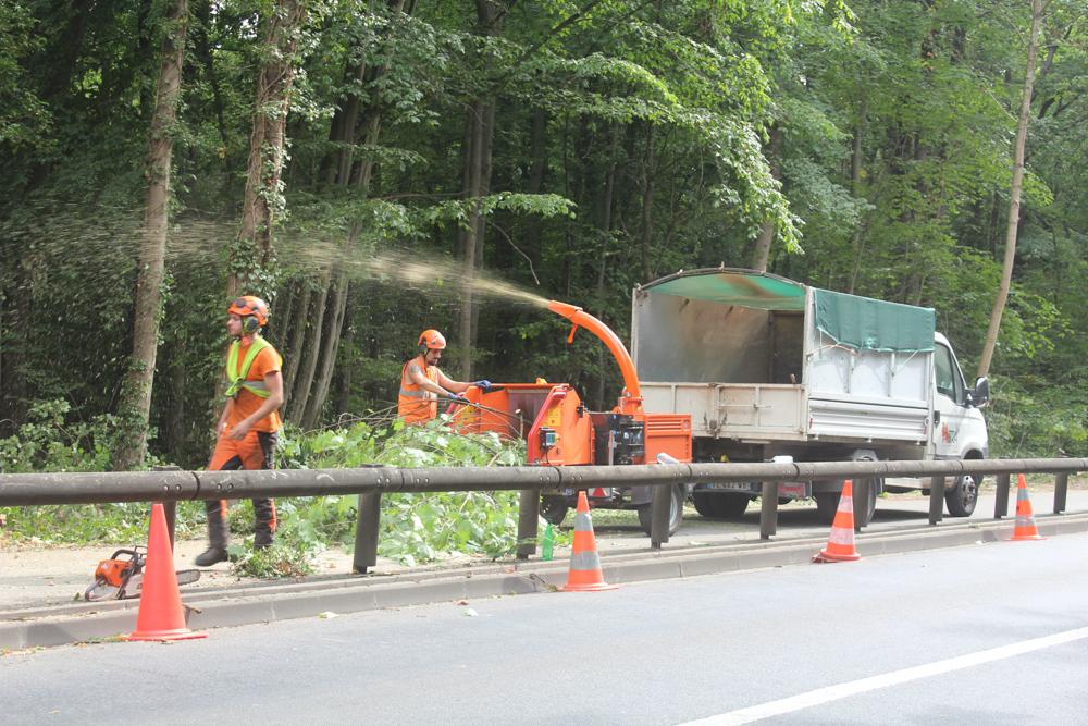 Avenue de Valenton: mise en sécurité de la lisière de la forêt