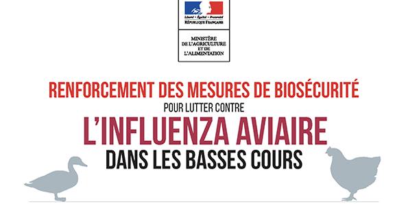 Lutte contre l'influenza aviaire dans les basses cours